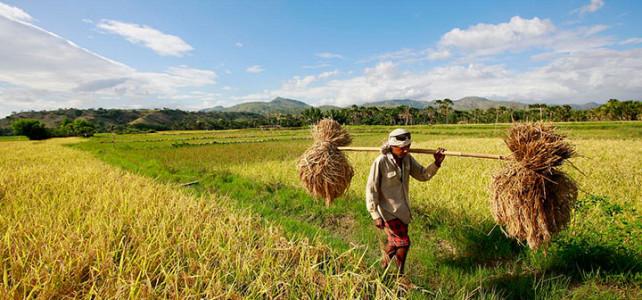 Jual Alat Mesin Pertanian di Malang