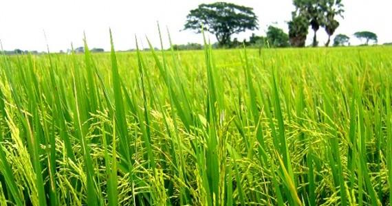 Jual Mesin Agroindustri di Malang