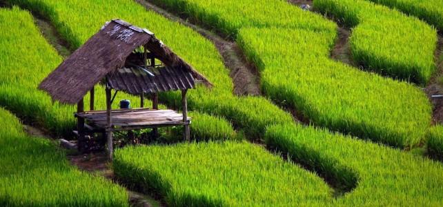 Alat Mesin Pertanian Yang Digunakan di Indonesia