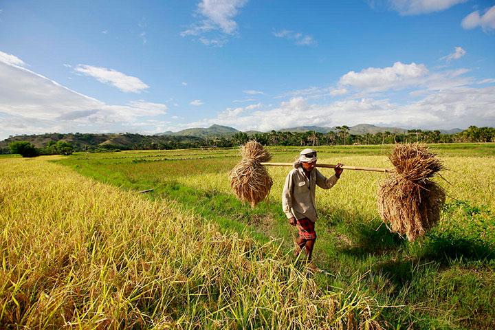 Alat Mesin Pertanian