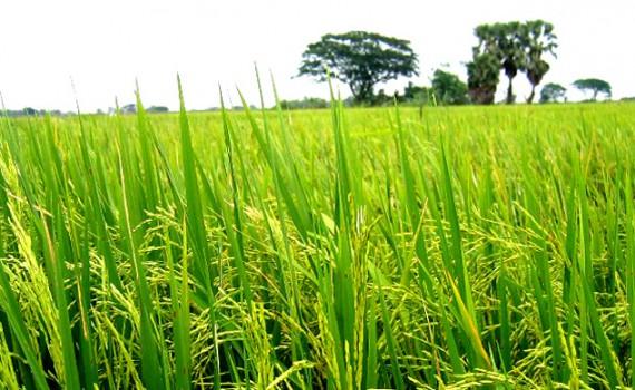 Mesin Agroindustri