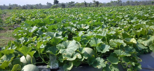 Jual Mesin Agroindustri Malang